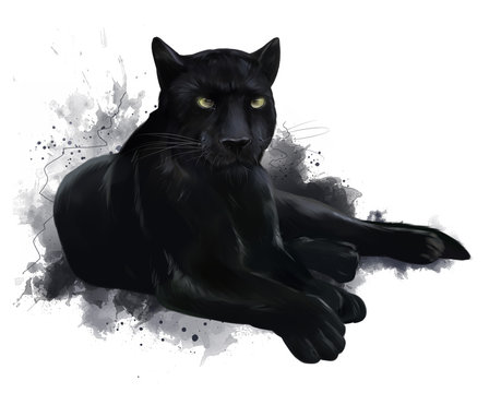 A large black Panther. Watercolor painting