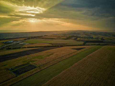 Aerial drone view of grain fields, wheat during golden sunset. Agricultural pattern. Moldova republic of.