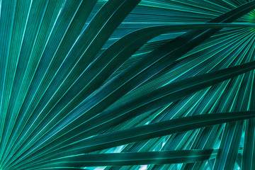 Wall Mural - tropical palm leaf and shadow, abstract natural green background, dark tone