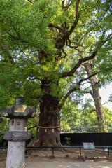 東照宮の神木
