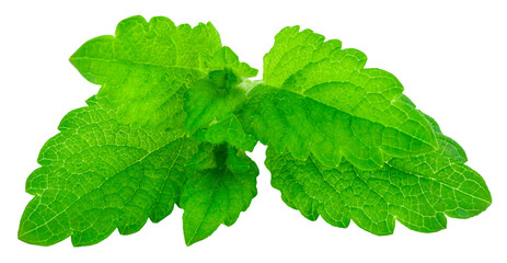 fresh green leaf of melissa isolated on white background Wall mural