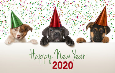 Spoed Fotobehang Hond Happy new year puppies looking over a wall
