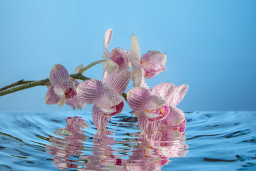 Pink orchids and water.