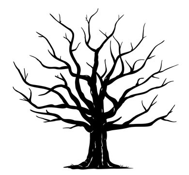 Silhouette of one wide massive old oak tree without leaves isolated illustration, black majestic oak without foliage with a rough trunk and big crown