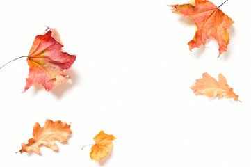 Autumn season mockup. Red maple and yellow oak leaves on a white background. Flat lay composition photo in elegant style Wall mural
