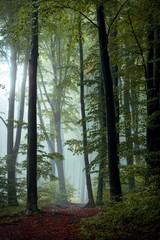 Keuken foto achterwand Bos in mist Fairy tale trail in autumn foggy forest. Strange mist in the woods