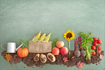 Autumn organic food produce