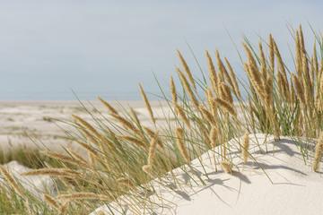 Fototapete - Dünenlandschaft an der Nordsee