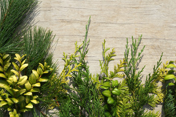 Horizontal flat lay of green and yellow evergreen leaves on a white-washed wood background, with copy space