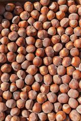 Top view of hazelnut