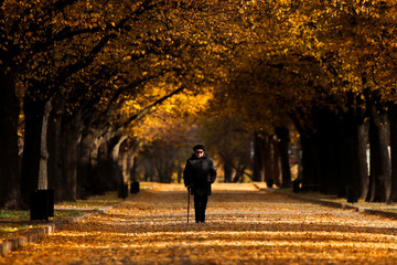 A woman walks under the trees with autumn coloured leaves in Moscow