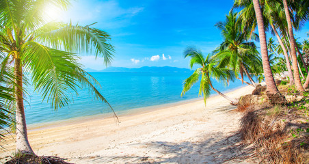 Beautiful tropical beach and coconut palm trees, Koh Samui, Thailand