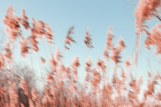 Abstract tall grasses blowing in the breeze