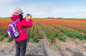 Woman take a photo on colorful tulip flower field