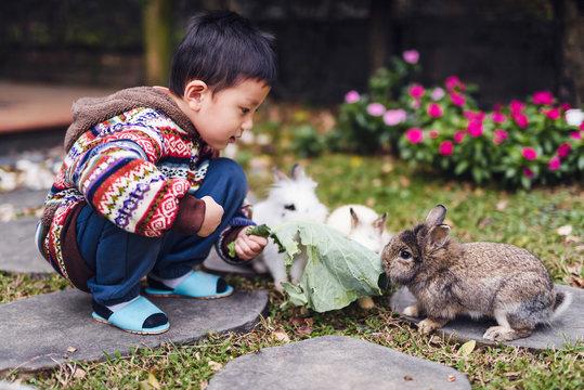 Little boy take leaf to feed rabbits.
