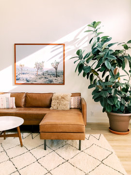 Couch and plant in living room