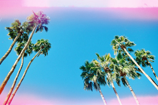 palm trees against blue sky with pink light leaks
