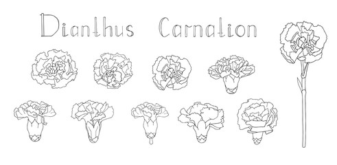 Vector illustration. Collection of hand drawn floral elements isolated on white background. Clip art for your design. Handwritten lettering. Translation - Carnation