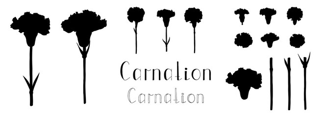 Vector illustration. Big set of hand drawn floral elements isolated on white background. Silhouettes of carnation flowers. Clip art for your design. Handwritten lettering