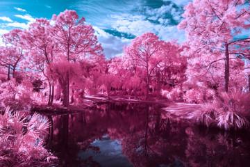 Black water lake and pink trees