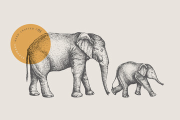 Big African elephant and small baby elephant, drawn by graphic lines on a light background. Animals of Africa and Asia. Natural objects. Old engravings. Vector illustration.