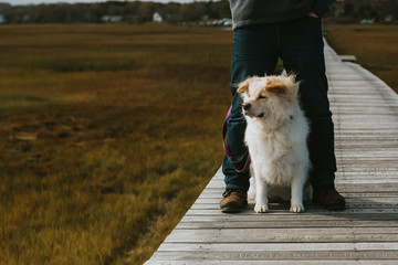 Cute dog sitting between adult male legs on boardwalk over salt marsh