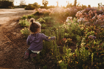Backlit image of back of toddler girl playing in field of flowers