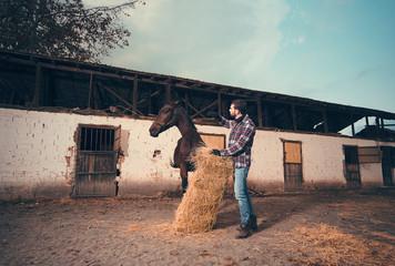 Horse-keeper feeding wild horse