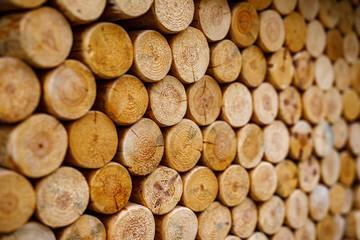 Poster de jardin Texture de bois de chauffage Round firewood texture. Pile of wood logs ready for winter.