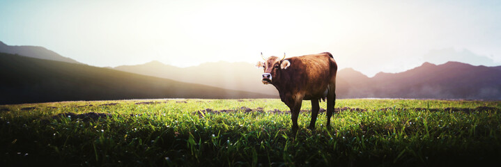 Foto op Plexiglas Koe brown cow on top of the mountain