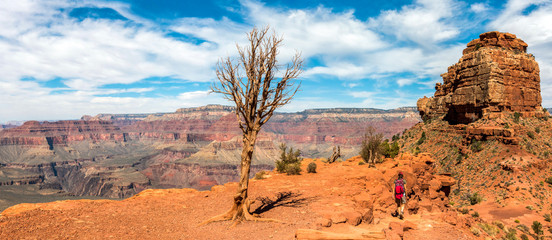 A Young Tree Surving in the Bleak Stone Desert of Grand Canyon, picture taken from South Kaibab Hiking Trail, Arizona/USA