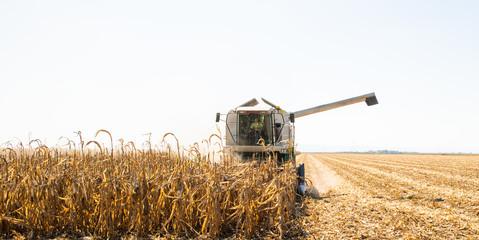 Combine harvester working in a corn field