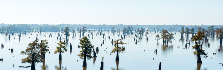 Panoramic View of the Bayous in Louisiana in the Morning, USA Fotomurales