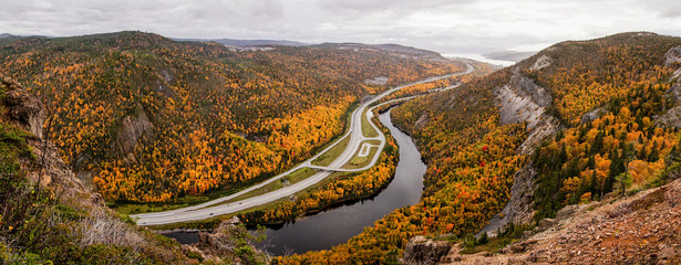 Yellow, Orange and Red trees in a forest during Autumn / Fall Season in Corner Brook, Newfoundland, Canada.