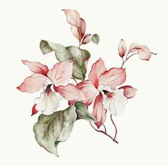 Flowers watercolor illustration.Manual composition.Big Set watercolor elements.