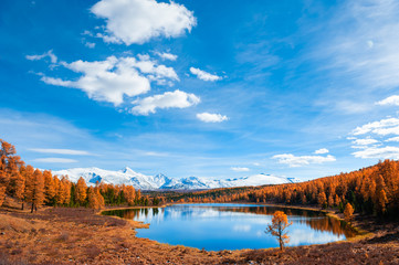 Kidelu lake in Altai mountains, Siberia, Russia. Yellow autumn forest, snow-covered mountains and the blue sky. Beautiful autumn landscape.