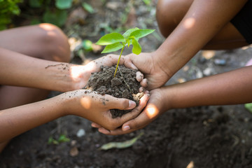 Picture of Growing concept eco hand children planting together on soil background