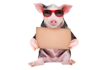 Cute pig in sunglasses with a cardboard sign isolated on white background