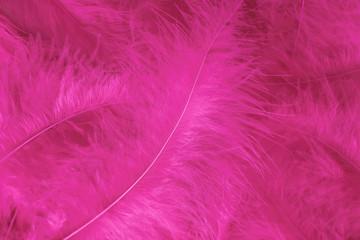 Beautiful light pink bird feathers pattern texture background.