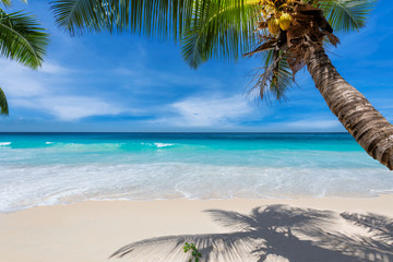 Fototapete - Tropical beach background. Sandy beach with palm and turquoise sea. Summer vacation and tropical beach concept. Summer vacation and tropical beach concept.