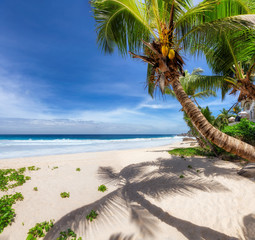 Tropical Beach. Sandy beach with palm and turquoise sea. Summer vacation and tropical beach...