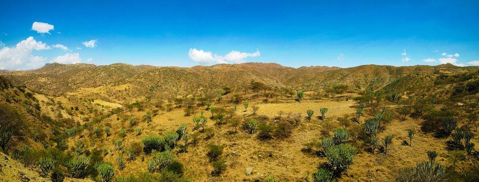 Landscape of Filfil national park with Euphorbia candelabrum succulent plants , Eritrea
