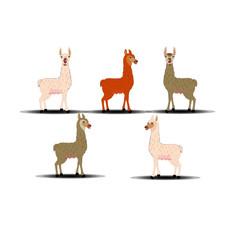 Llama - Cartoon Vector Image Collection