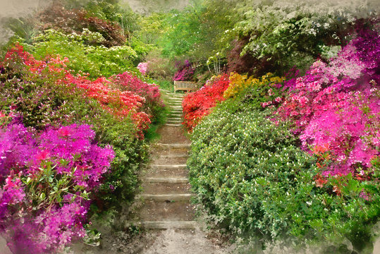 Digital watercolor painting of Beautiful vibrant landscape image of footpath border by Azalea flowers in Spring in England