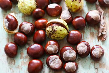 Kastanien im Herbst, Herbstanfang, Früchte der Rosskastanie, Deko, balsteln, waschen