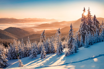 Photo sur Aluminium Bleu jean Impressive winter scene of Carpathian mountains with snow covered fir trees. Spectacular outdoor scene of moumtain forest. Beauty of nature concept background.