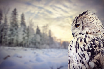 Fotoväggar - owl on winter dark forest background