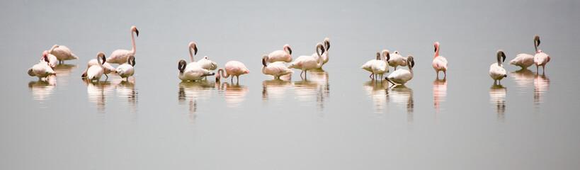 Fotorollo Flamingo Flamingo