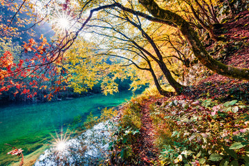 Foto op Plexiglas Herfst Sunny morning view of pure water river in Plitvice National Park. Amazing autumn scene of Croatia, Europe. Abandoned places of Plitvice lakes series. Beauty of nature concept background.