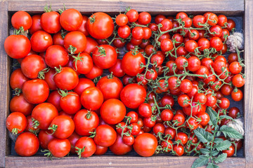 Cherry tomatoes in old wooden tray.